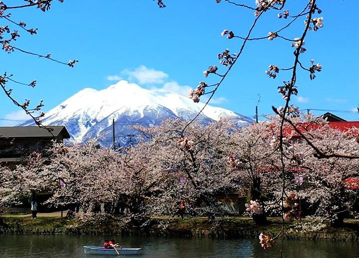 弘前城から見る岩木山と桜
