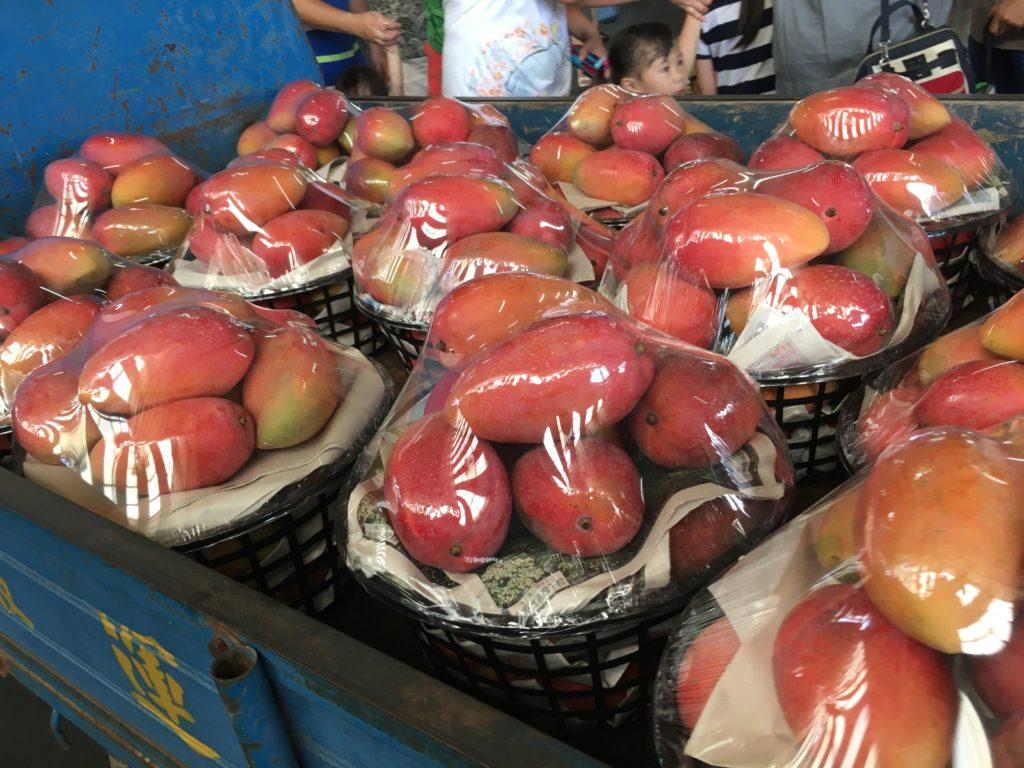 玉井のマンゴー