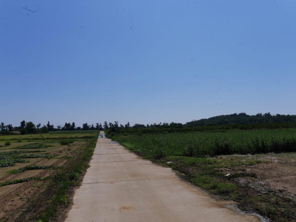 小金門の畑