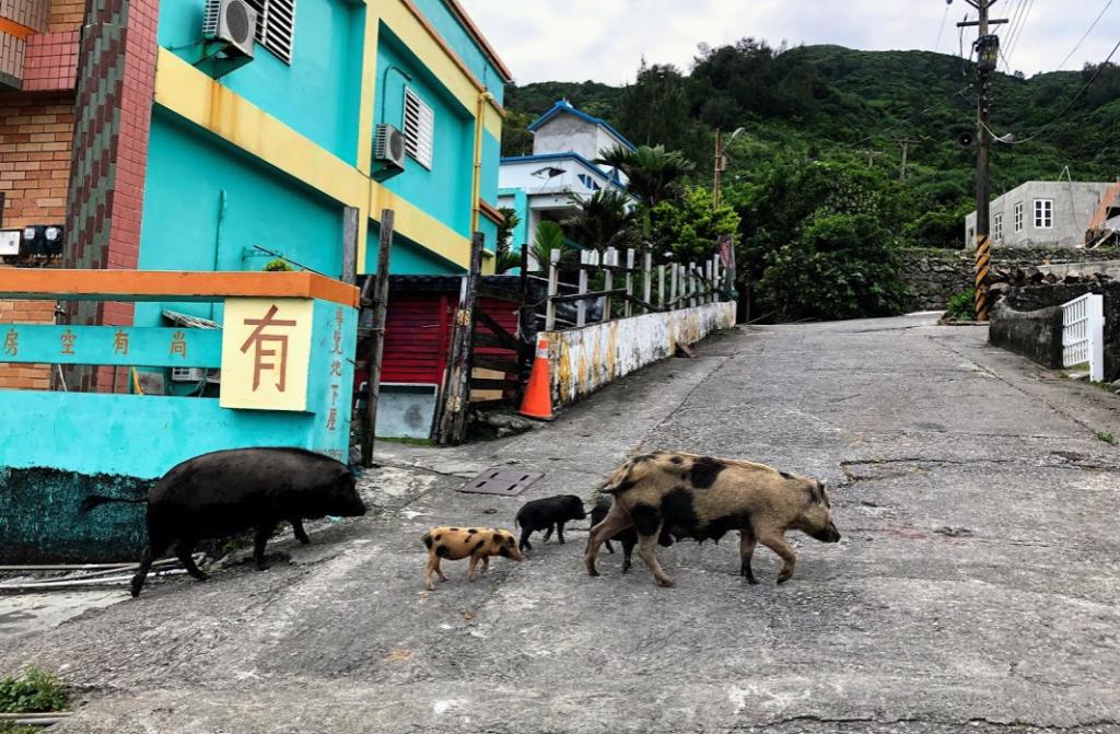 野良豚パレード